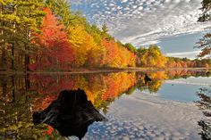 Fall Foliage (USA). 'One of New England's greatest natural resources is seasonal…
