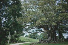 2012 May | Wedding Photographer | Jonas Peterson | Australia | Worldwide