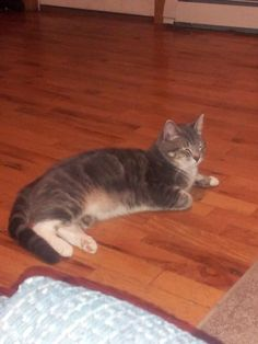 MISCHIEF (Bath, 6/18) Intact male, Union street, Bath area, He is a year old and don't like adults too much but might answer a child who calls him. Please call 449-0804