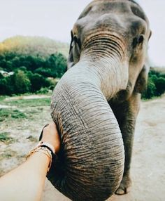 50 Adorable Baby Animals Will Surely Make Your Day Brighter Cute Creatures, Beautiful Creatures, Animals Beautiful, Majestic Animals, Animals And Pets, Baby Animals, Cute Animals, Elephant Love, Elephant Trunk