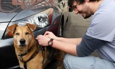 Outside Blum Animal Hospital, Travis gives Ethel her vaccine for the canine flu. In two or three weeks, following the booster Ethel will be protected, or at least protected against serious illness