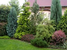These are three of the most useful front yard landscaping ideas that have been used by homeowners in the past. The charm of these front yard landscaping ideas. Privacy Plants, Privacy Landscaping, Landscaping Tips, Modern Landscaping, Front Yard Landscaping, Privacy Screens, Planting For Privacy, Landscaping With Trees, Backyard Landscaping Privacy