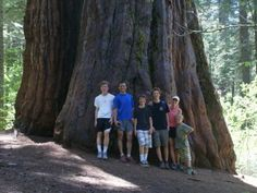 Check out #SamHodder's #GiantThoughts blog to see why the redwood forest has all the ingredients for the perfect Father's Day experience!