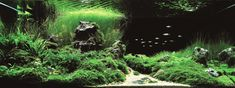 The Top 25 Ranked Freshwater Aquariums in the World Planted Aquarium, Aquarium Fish, Aquarium Design, Life Aquatic, Live Fish, Aquatic Plants, Design Competitions, Freshwater Aquarium, Live Plants