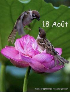 Pretty Birds, Love Birds, Beautiful Birds, Animals Beautiful, Beautiful Couple, Nature Animals, Animals And Pets, Cute Animals, Tier Fotos