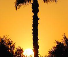 Marrakech - Palme im Sonnenuntergang