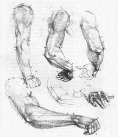 https://www.google.com/search?q=Die Gestalt des Menschen by Gottfried Bammes