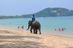 Beachfront is a Luxury Condo in Phuket in a new Boutique Luxury Hotel situated in the most scenic part of Phuket which is known as Bangtao near Kamala and Patong Luxury Condo, Condos, Baby Elephant, Phuket, Little Babies, Thailand, Around The Worlds, Animals, Elephant Baby