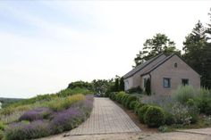 Petite Rivière Vineyards grows elegant, complex wines in a sunny microclimate on Nova Scotia's South Shore.  The LaHave River Valley Wine Region is recognized as one of the earliest grape. Nova Scotia, Wines, Beautiful Flowers, Vineyard, Old Things, Country Roads, Tours, Building, Pictures