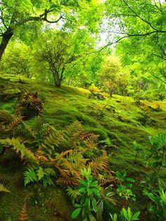 Moss Garden in Sogenchi Garden within Tenryu-ji Zen Temple in Arashiyama, Kyoto, Japan Moss Garden, Green Garden, Shade Garden, Nature Sauvage, Forest Flowers, Organic Gardening, Gardening Blogs, Gardening Zones, Gardening Services