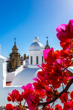 How the Coronavirus Will Change the Way forward for Journey Ibiza, Sherry Wine, The Fish Market, Tapas Bar, Incredible Recipes, Fresh Seafood, Cadiz, Like A Local, Old World Charm