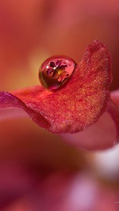 petal_drop_flower_43188_640x1136 | Flickr - Photo Sharing!