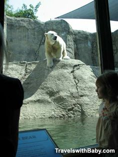 The elephants are wonderful, but my favorites are the polar bears - above and below the water - at the Oregon Zoo http://www.travelswithbaby.com/blog/photo-fave-polar-bear-plunge-at-the-oregon-zoo-portland/
