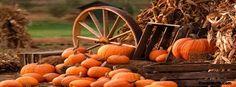 Fall Pumpkins Facebook Covers, Fall Pumpkins FB Covers, Fall Pumpkins Facebook Timeline Covers, Fall Pumpkins Facebook Cover Images