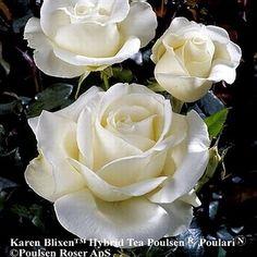 Rose Karen Blixen