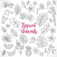 Set of contour tropical elements. Toucan, macaw, bamboo, pineapple, orchid Сток Вектор Стоковая фотография