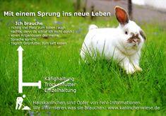 Wie alt werden Kaninchen im Durchschnitt? - Gesundheit, Haltung, Kaninchen, Pflege, Unkategorisiert, Unterhaltung
