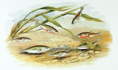 Noise pollution impacts fish species differently