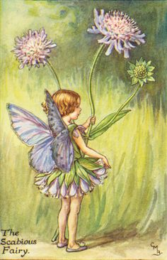 The Book of the Flower Fairies by BARKER, Cicely M. - Jonkers Rare Books