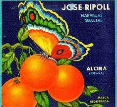 Naranjas José Ripoll.