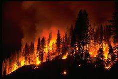 Colorado Wildfire Map