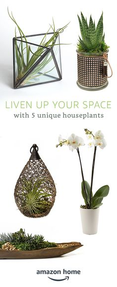Liven up your space with 5 unique houseplants. Shop these and other live plant favorites today.