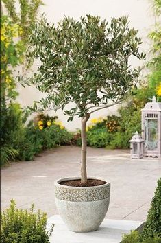 Cool Plants, Trees To Plant, Home Deco, Seeds, Exterior, Color, Gardening, Thoughts, Country