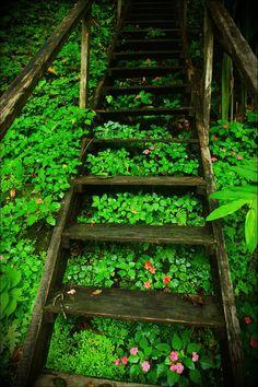Forest stairway, San Jose, Costa Rica