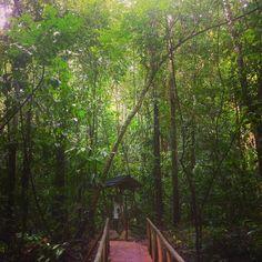 #CostaRica 's #manuelantonio #nationalpark was just great if you like #trecking  #マヌエルアントニオ国立公園  は終始こんなかんじ緑が好きで歩くのが好きだったら1日楽しめるよ #ガイド つけてもよいけどつけなくても沢山動物みれるから不要でした 欧米には有名な観光地らしくとても安全  #中南米 #コスタリカ #エコツーリズム  #サンノゼ #マヌエルアントニオ #国立公園  #ecotourism #travel #bustrip #travelblogger #summertrip #latinamerica #latin #ラテン #なつやすみ #夏 #summer2016 #vacation #トラベルブロガー