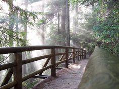 Capilano River Regional Park, North Vancouver BC, Canada