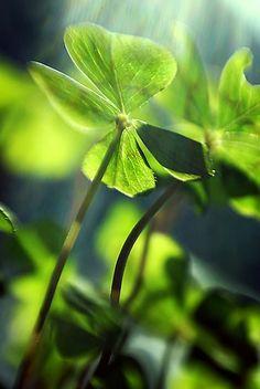 Nature + Tout en vert mousse