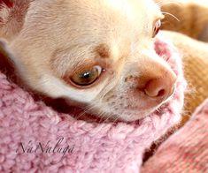 Little Puppies, Neck Warmer, Chihuahua, French Bulldog, Dog Cat, Wool, Animals, Etsy, Bulldog Frances