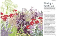 Download our designer border plan: Herb border | Gardens Illustrated