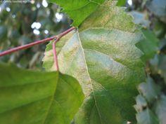 hojas verdes :)