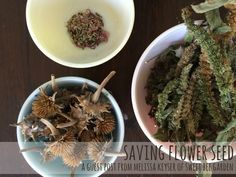 Saving Flower Seed