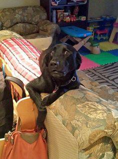16 perros que no esperaban que sus dueños volvieran a casa tan temprano. Atención al 11 #viral