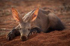 The walking termite mound. <em>Image ©Marco-Tonoli</em>