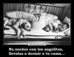 Los mejores amigos #animales #perros
