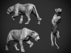 This was a study that i started while ago, to do some animal sculpting, hope you like it! Cat Anatomy, Animal Anatomy, Animal Sculptures, Sculpture Art, Pumas Animal, Modelos 3d, Art Anime, Creature Design, Zbrush