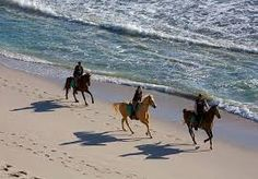 Horseback Riding Tour from Punta Cana in Dominican Republic Central America Web Hotel, South Africa Holidays, Beach Haven, Air Balloon Rides, African Safari, Toscana, Nature Reserve, Africa Travel, Adventure Is Out There
