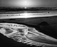 ansel adams images | ansel-adams-birds-on-a-beach