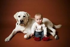 Yellow Labrador And Cute Baby Photoshoot Dogs And Babies Dogs And Kids, Animals For Kids, Baby Animals, Cute Animals, Cute Dogs, Cute Babies, Adorable Puppies, Dog Safety, Dog Lady
