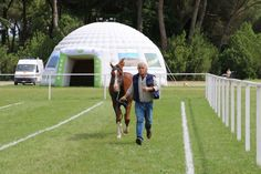 Mario Cutolo at the Vet Gate Gate, Mario, Soccer, Horses, Lifestyle, Sports, Football, Sport, Horse