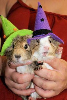 Halloween piggies :D :D