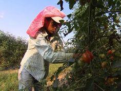 The debate on child farm labor