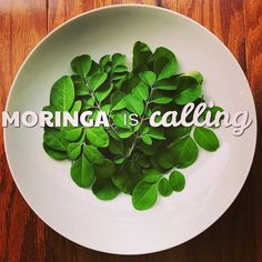 #Moringa is calling - will 2018 be the year you try this amazing #superfood?   #Nutrients #Healthy #Delicious #Organic #Resolutions  See more at www.miracletree.org.