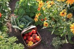 Farm and Garden Fair - Concord Food Network