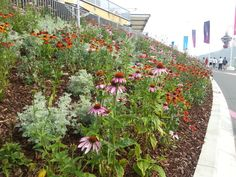 Various planting from the Olympic Park London 2012