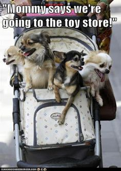 So DogGone Funny!: Funny Dog Pictures
