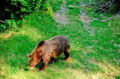 Panoramio - Photos by Roland Lüthi > best Black Bear, Photos, Animals, Switzerland, Scenery, Viajes, Animales, American Black Bear, Animaux